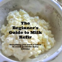 Milk-Kefir-Grains-in-a-strainer-label